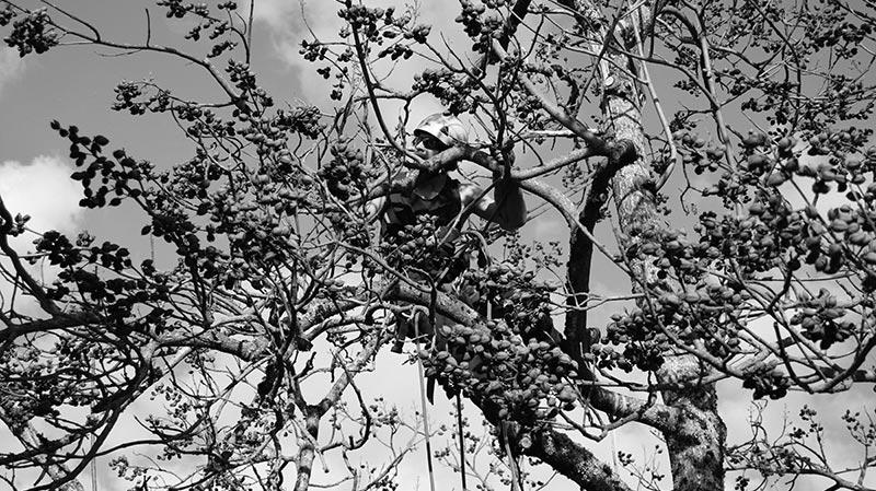 Arboriste-Grimpeur