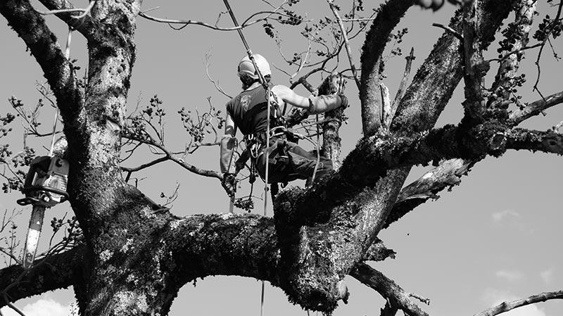 Arborix Troll des Bois dans un arbre